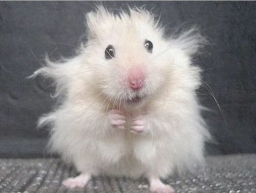 Hamster Stressed